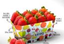 Uniq presenta: Barquetas sostenibles en cartón